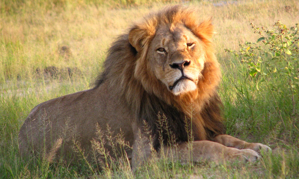 Zimbabwe Hunting Packages - Click On Photo To Enlarge